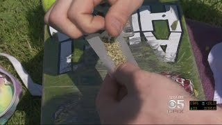 Pot Enthusiasts Gather Early For 4/20 Celebration In Golden Gate Park