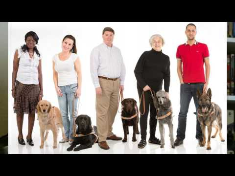 Guide Dog School and Training Experience Tag for GDD