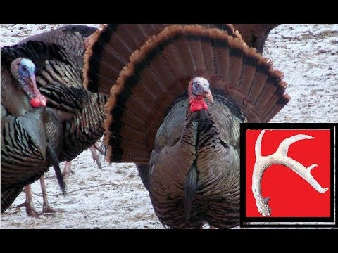 Hilarious Wild Turkey Calling and Whitetail Antler Sheds : )