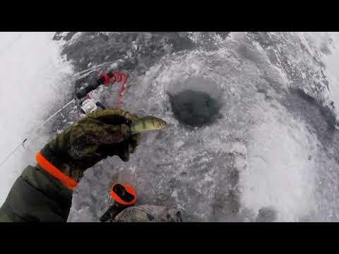 Lake Simcoe 2020 First Ice Cooks Bay Jumbo Perch