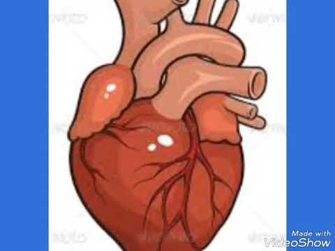 5 main organs of human body