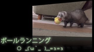 All subtitles in the movie are in Japanese. Ferret chase the ball ...