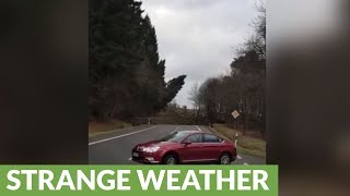 Incredible storm in Germany knocks over massive trees with ease
