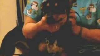 *URGENT* Shelter Dog Kelly
