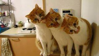 Милые пушистые коты!Новинка 2015!