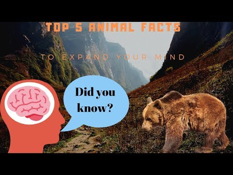 Top 5 Animal Fact's To Expand Your Mind