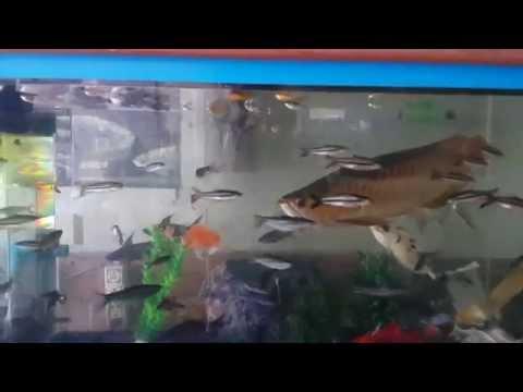 ปลามังกรแดงพาฝัน 3 บังแระ