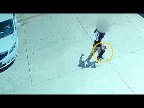 Una despiadada mujer arroja a su perro a un contenedor como si fuera basura