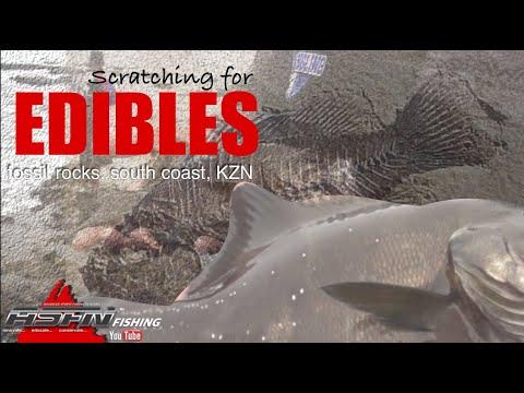 Edibles At Fossil Rocks South Coast