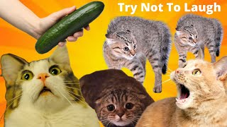 CUTE CAT VIDEOS-Funny Animals Try Not To Laugh-Kittens Playing