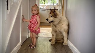 Adorable Baby Feeds Her Giant Best Friend!! (Cutest Ever!!)