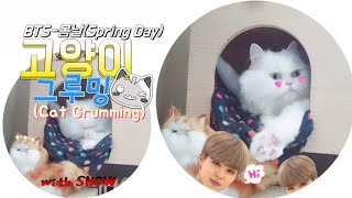 [까까캔디] 그루밍하는고양이| 그루밍하는이유 |배경음악 BTS봄날 (Spring Day) 국악 버전 (Korean Traditional Instrument Ver)