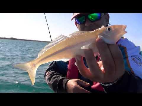 Whiting Squid Fishing Merry Christmas!