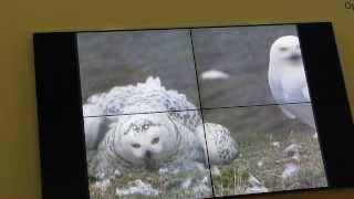 Никита Овсянников, Фото и видеосъемка диких животных Арктики  часть-4