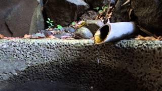 関口芭蕉庵の湧水