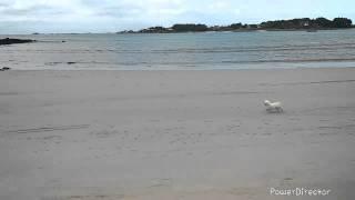 Course poursuite :  voiture RC vs petit chien
