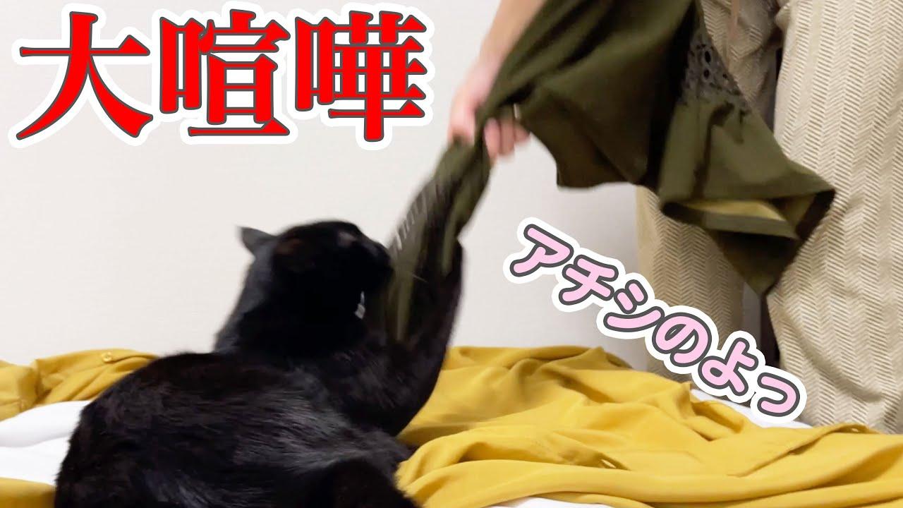【まるで姉妹】保護猫と彼女が服選びで大喧嘩し始めて…
