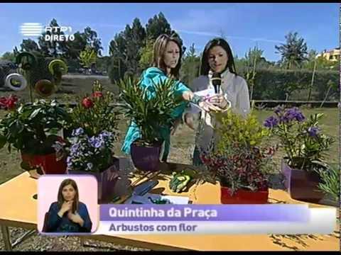 Dica de Jardinagem: Arbustos com flor  -- Praça da Alegria