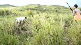 Hunting Hawaii - Kuaokala Birdhunt For Francolin
