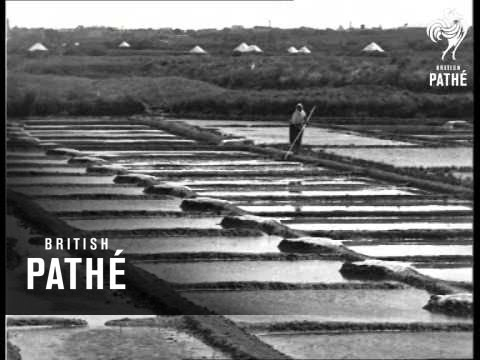 Near The Sands Of Vendee - France (1933)