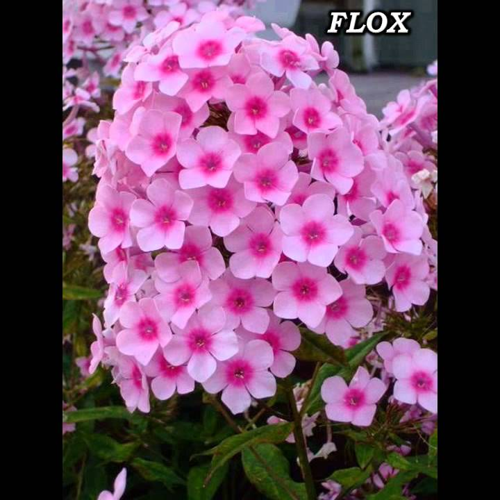 paraziták otthon virágok