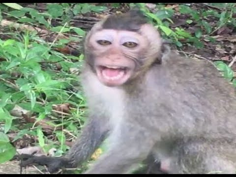 Lets watching ! One baby monkey mistreat back after two babies monkey have a very bad play to him