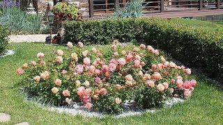 Клумбы в саду (45 фото): особенности красивых, садовых ограждений, идеи, фото и видео