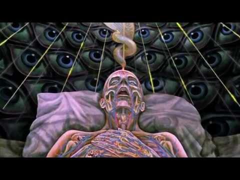 DMT, La molécule de l'esprit: Les potentialités insoupçonnées du cerveau humain