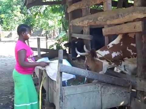 Farm Life in Mbeya, Tanzania 2014