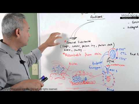 Immunology Lecture 16 - Type IV Hypersensitivity Reactions
