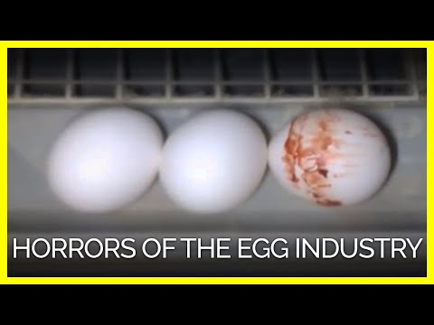 The Egg Industry Doesn't Want You to See This