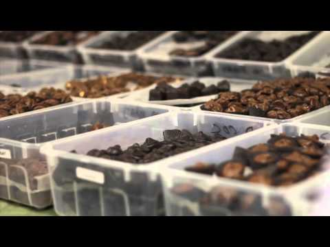 How to Make Handmade Chocolates-Lorah's Handmade Chocolates