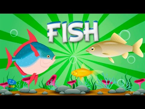 Fish | Educational Video For Kids.