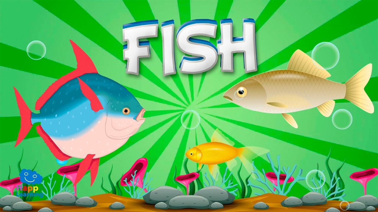 Fish | Educational Video for Kids. - YouTube