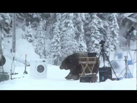 РжачМедведь помог протестировать стиральную машину