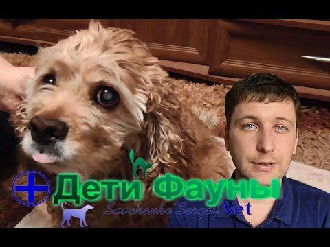 Катаракта у собак, признаки и лечение. Советы ветеринара