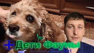Катаракта у собак. Лечение катаракты. Советы ветеринара(Катаракта у собак - одно из распространенных заболеваний глаз. В ролике рассказываю о причинах катаракты..., 2016-04-06T11:09:25.000Z)