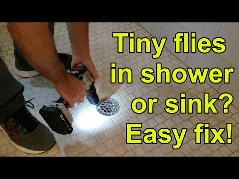 How To Get Rid Of Drain Flies In Shower Or Kitchen. Easy Fix!