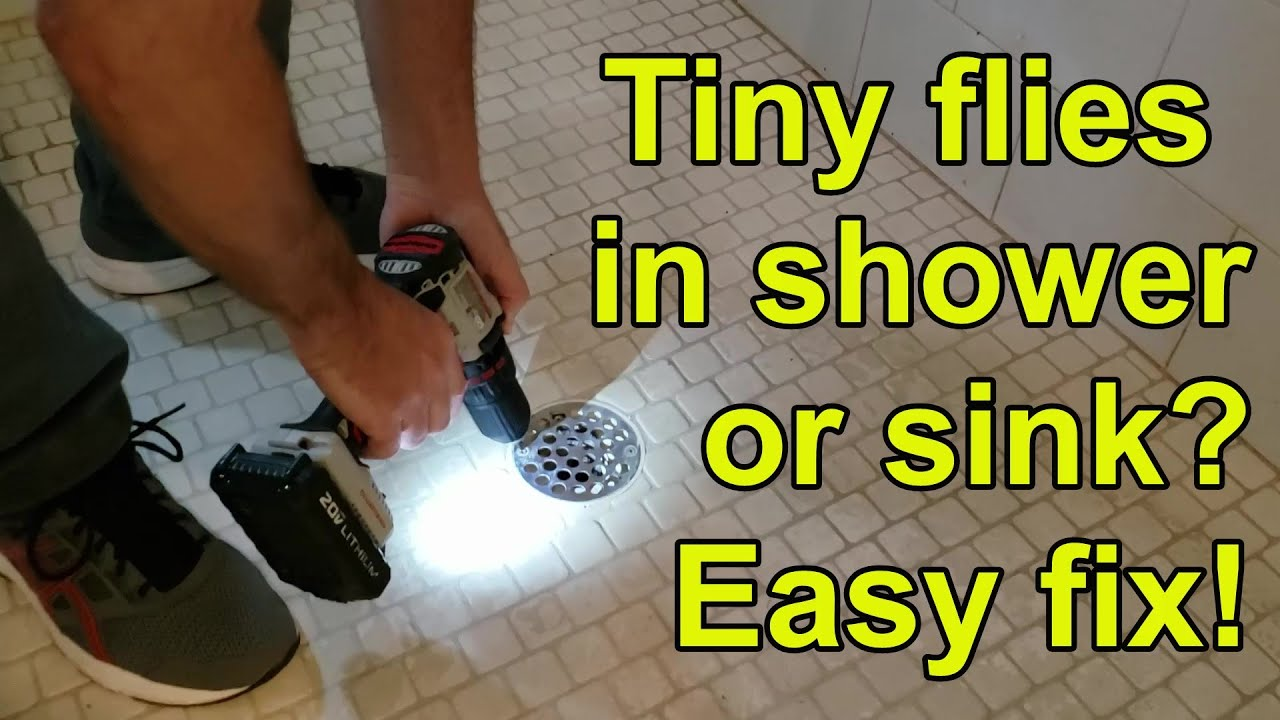 How To Get Rid Of Drain Flies In Shower Kitchen Or Bathroom Youtube