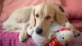 У собаки отрыжка что делать? Почему у собаки отрыжка после еды причины?