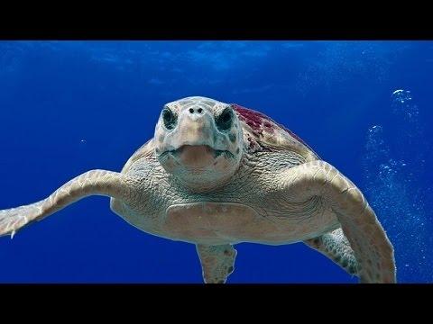 En Ilginç 10 Kaplumbağa Türü Youtube