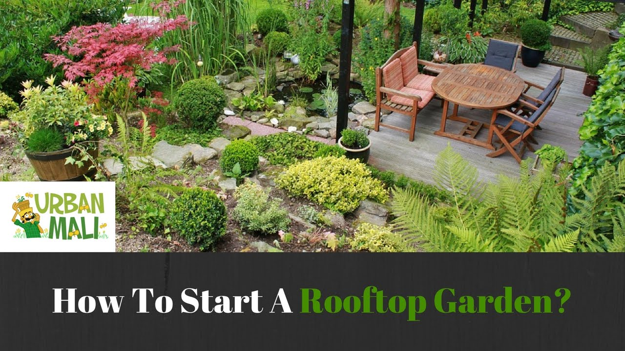 How To Start A Rooftop Garden Youtube