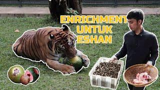 Download lagu ENRICHMENT SIANG HARI ! REAKSI ESHAN BELUM PERNAH SEPERTI INI SEBELUMNYA !
