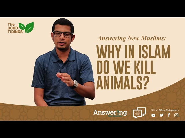 Answering New Muslims:  Episode 03:  Why in Islam do we slaughter animals?  {TheGoodTidings}