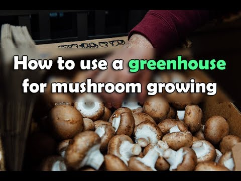 How to grow mushrooms in greenhouse ?