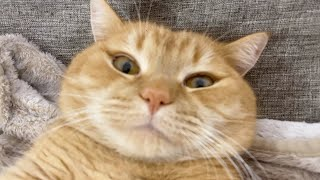 「あっ(察し)、、これダメなやつだ。」全てをあきらめた猫