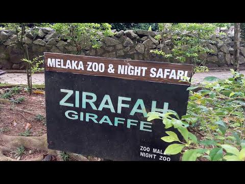 Pengalaman di Melaka Zoo & Night Safari Malaysia