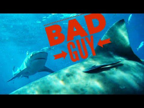 Bad Guy Fighting Baddest Fish In The Sea!!! (Shark Ate Trolling Motor)