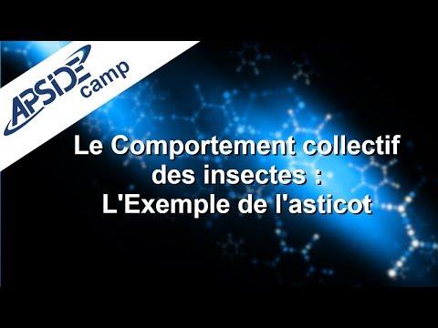 Le Comportement collectif des insectes : L'Exemple de l'asticot