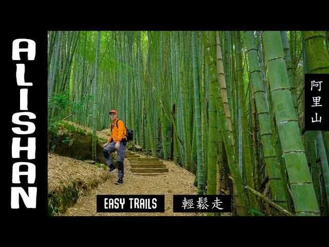 ALISHAN Easy Trails  (阿里山/輕鬆走步道)